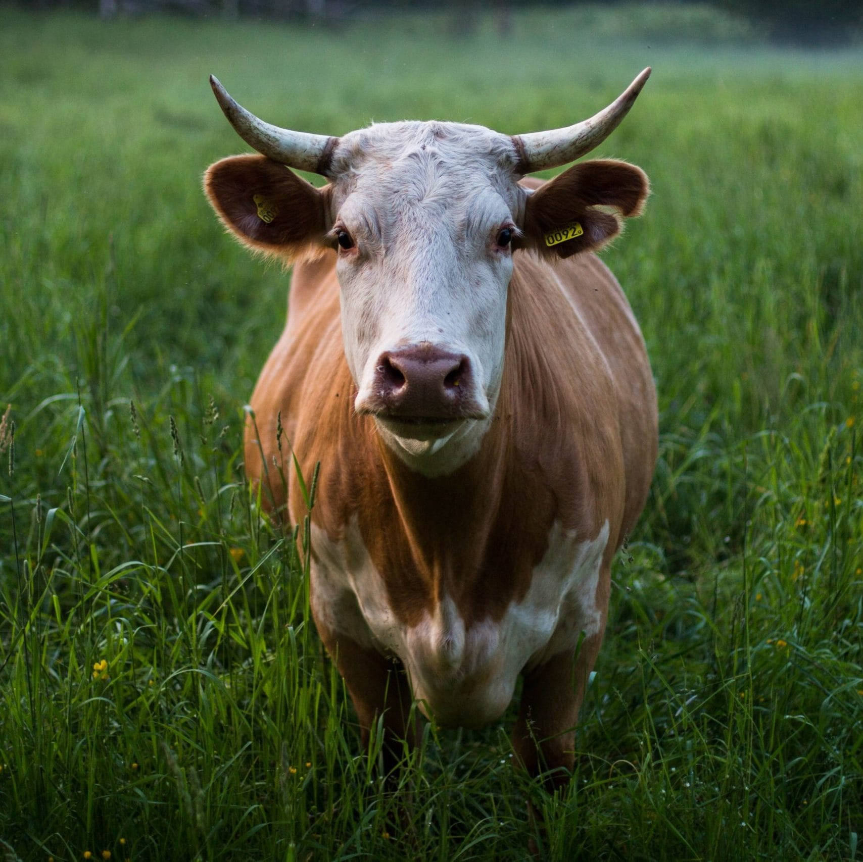 Verra Announces New Methodology for the Reduction of Enteric Methane Emissions from Ruminants