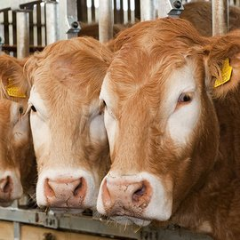 Feed supplement that cuts livestock methane emissions launched